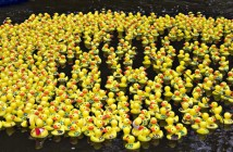 Duck-Race-which-way.jpg